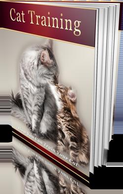 Best cat training books